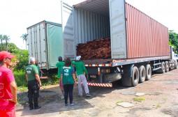 Ipaam e Batalhão Ambiental apreendem carga ilegal de maçaranduba que iria para Fortaleza