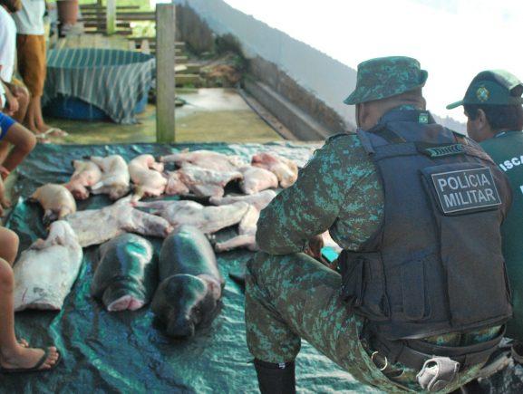 Ipaam e Polícia Ambiental apreendem animais silvestres abatidos em Manaus e Beruri