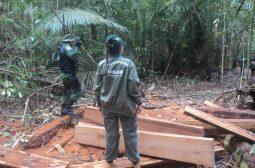 Ipaam realiza operação para combater extração de madeira ilegal em RDS