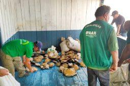 Ipaam aplica mais de R$ 1,5 milhões em multas por crimes ambientais em Barcelos