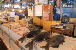 Ipaam informa que oito espécies de pescado saem do período defeso no Amazonas