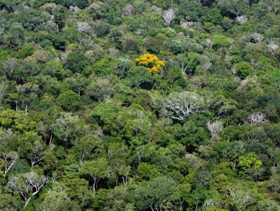 Ipaam informa sobre liberação das atividades de exploração florestal para  2020