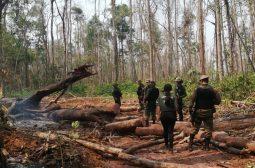 Operação Curuquetê 2 embarga mais de 3,7 mil hectares de terras no sul do Amazonas