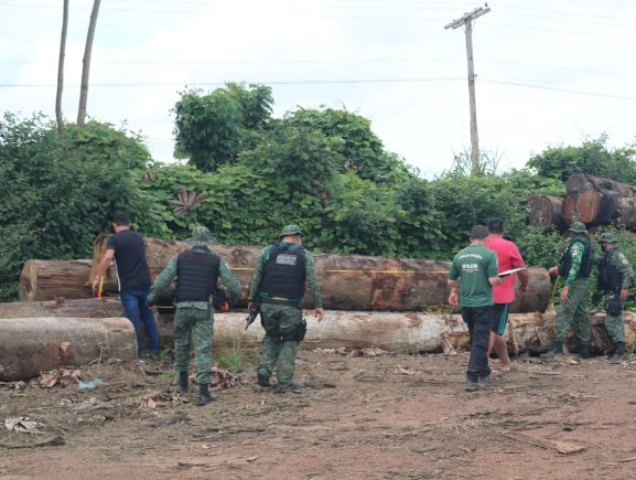 Operação Tamoiotatá: Madeireira é multada em mais de R$ 190 mil em Manicoré